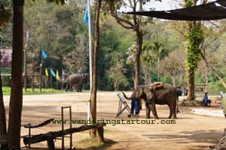 Elephant painting show at Thai Elephant Conservation Lampang