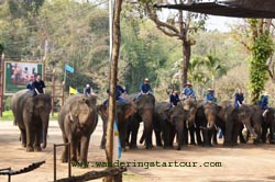 Elephant Show at Thai Elephant Conservation in Lampang