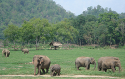 You Learn a lot about the Asian Elephant and why it is important to protect them.