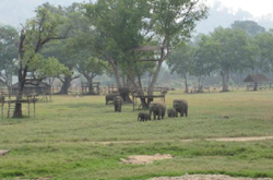 Elephant Nature Park is an amazing place