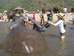 Wonderful place. Hand feeding Rescued elephants and helping to bathe them