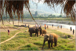 Elephant Nature Park is an amazing place, a real highlight and wonderful to see these beautiful and friendly animals.
