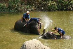 Thai Elephant Conservation Center in Lampang