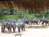 Watch elephant show