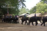 Elephant show time