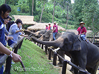 Feeding elephant at Mae Sa Elephant camp