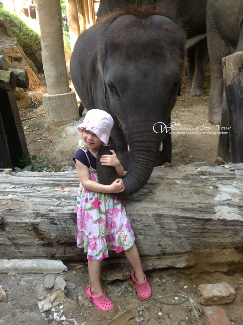 play with elephant
