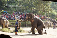 Elephant show at Mae Sa Elephant Camp