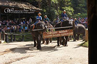 Visit Elephant Camp and enjoy a variety of fabulous shows of elephants who love to show off their skills and have a good time