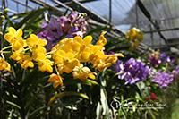 Visit orchid farm