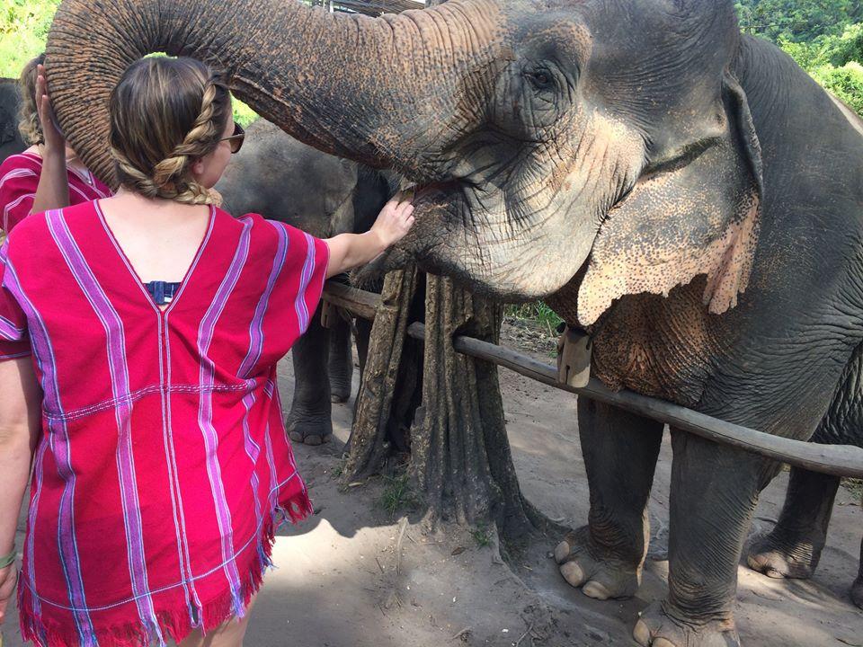One Day Elephant Sanctuary and Doi Innthanon National Park