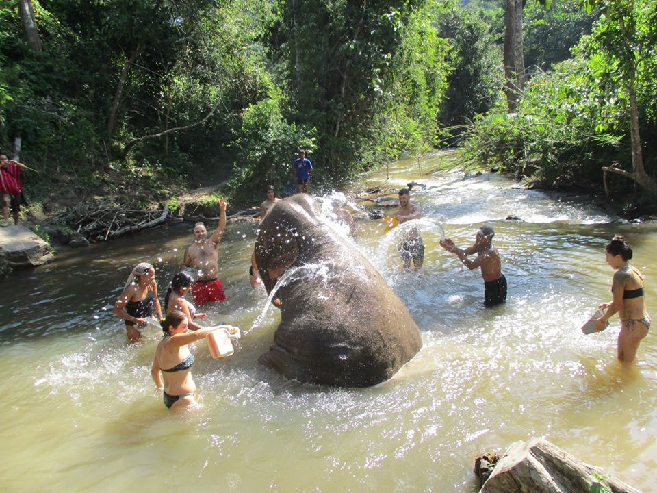One Day Elephant Sanctuary and Doi Innthanon National Park