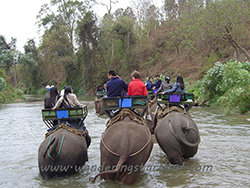 Mini Bus Rental Service - Chiang Dao Elephant Camp, Orchid and Butterfly Farm