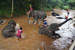 Visit Mae Sa Elephant Camp