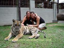 Visit Tiger Kingdom