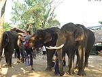 See elephant show