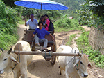 Ox-cart riding