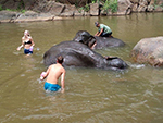 Bath elephant