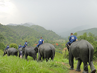 You will meet the elephants and practice using commands to ride and control the elephants