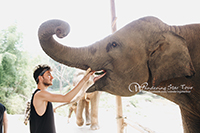 Elephant Interaction (No Riding) feeding by hand and being with them closely