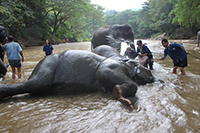 Ride your elephant to the river and give them a bathe.