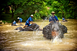 Elephant Bathing at Thai Elephant Conservation Lampang