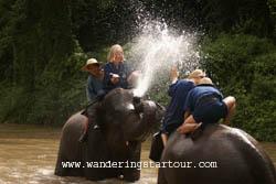 Enjoy bathing with Elephant when you book the mahout course