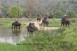 @ Thai Elephant Conservation in Lampang