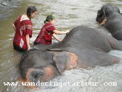 3 Day Special Training& Trekking at Chang Siam Elephant Camp