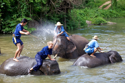 3 d / 2 night Elephant trekking at Thai Elephant Conservation Center in Lampang