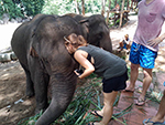 Elephant Trekking Care (No Riding)