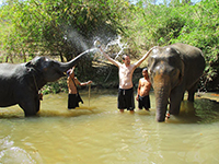 2 days elephant sanctuary & Trekking (No Elephant Riding)