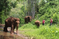 White water Rafting, Elephant care, Small trek & waterfall