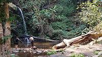 Doi Suthep Trek + 4 Waterfalls