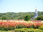 Visit  the twin stupas – namely Phra Mahathat Napaphon Bhumisiri Chedi and Napamaytanidol Chedi – built in honor of the King and Queen respectively
