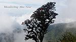 A wonderful scenery of Doi Innthanon National Park