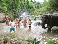 Playing and Bathing with Elephant