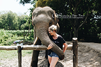 Elephant Interaction, feeding by hand and being with them closely