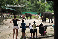 Watch Elephant show at Mae Sa Elephant camp