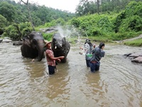 Lead elephant to the river and bath with elephant and take photos with elephant