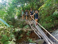 Hike through the jungle and pass rice fields  with scenic views (Depend on season)