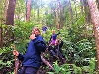 Trek 1.30 hours through thick, green jungle in year-round cool climate. Learn about tropical ecosystems from your local guides.