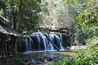 One day Jungle trek only walk and waterfall