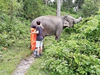 Interact with elephant life and healthy care.
